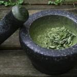 Stevia im Moerser